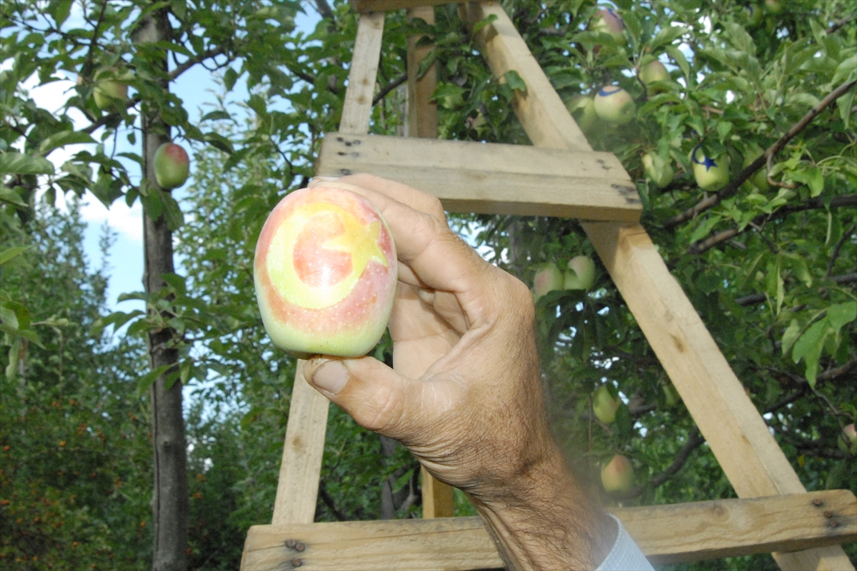 ay-yildizli-uzun-elmalar-ilgi-goruyor-(1).jpg