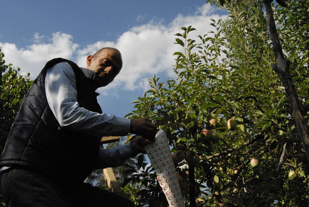 ay-yildizli-uzun-elmalar-ilgi-goruyor-(3).jpg