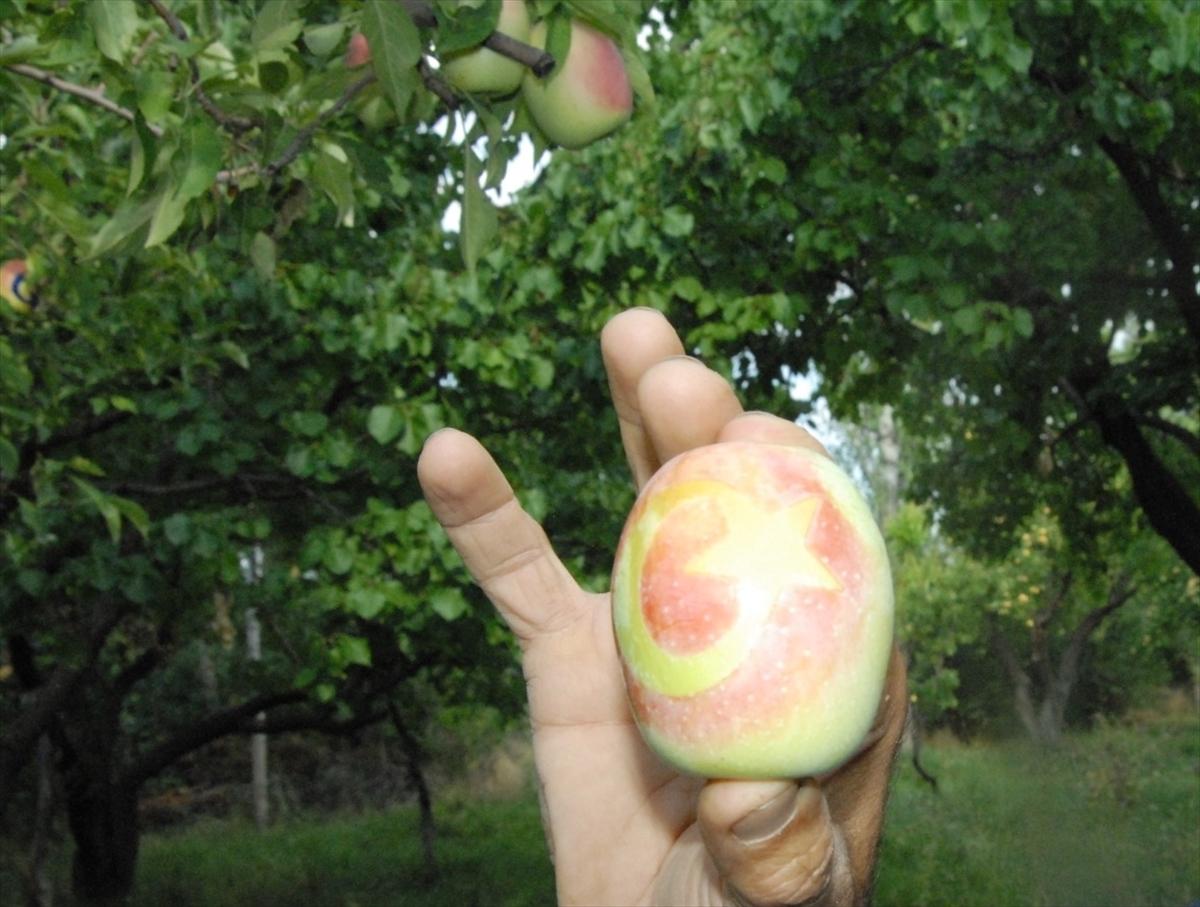 ay-yildizli-uzun-elmalar-ilgi-goruyor-(7).jpg