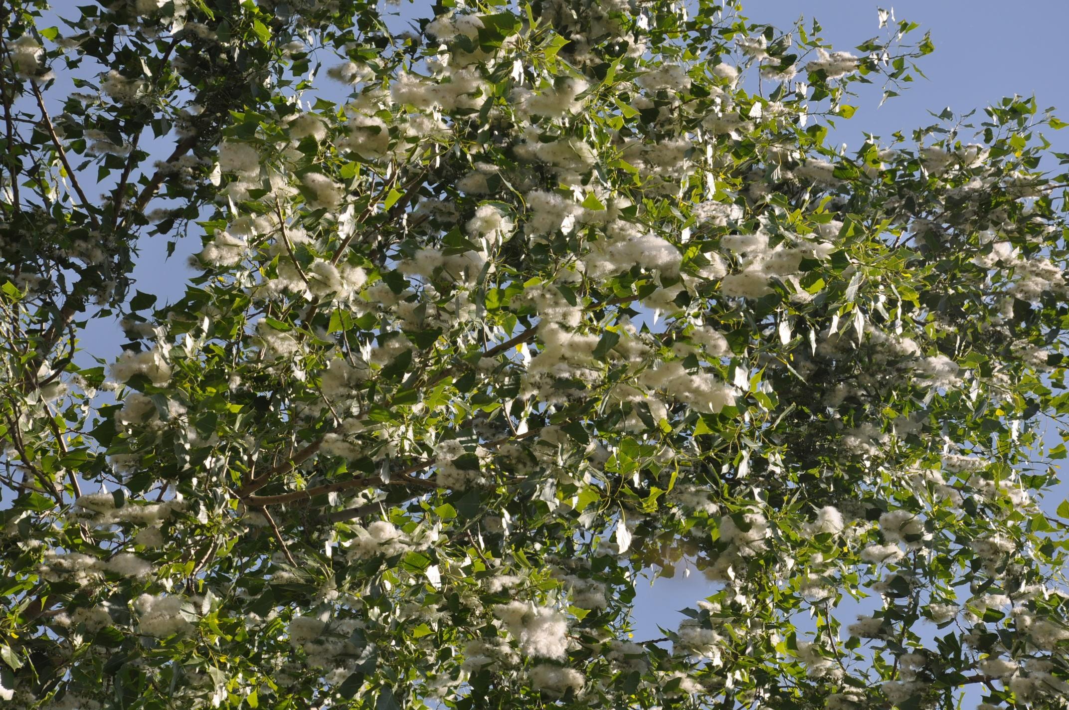 karsta-polenler-vatandaslari-rahasiz-ediyor--(2).jpg