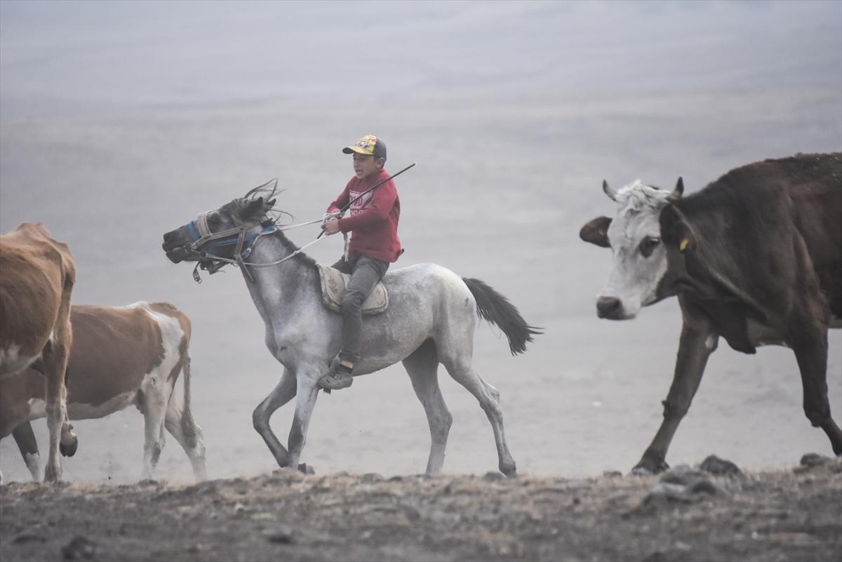 karsta-sut-ineklerinin-tozlu-yolculugu-(3).jpg