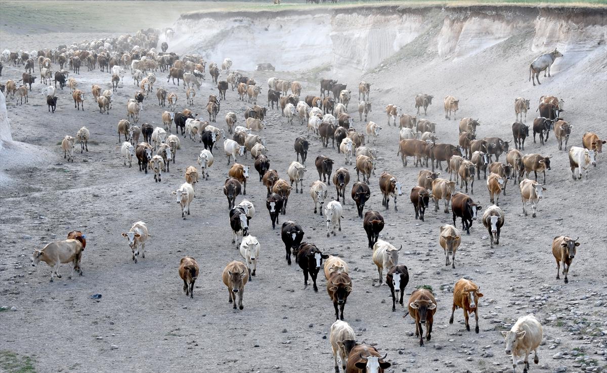 karsta-sut-ineklerinin-zorlu-yolculugu-(7).jpg