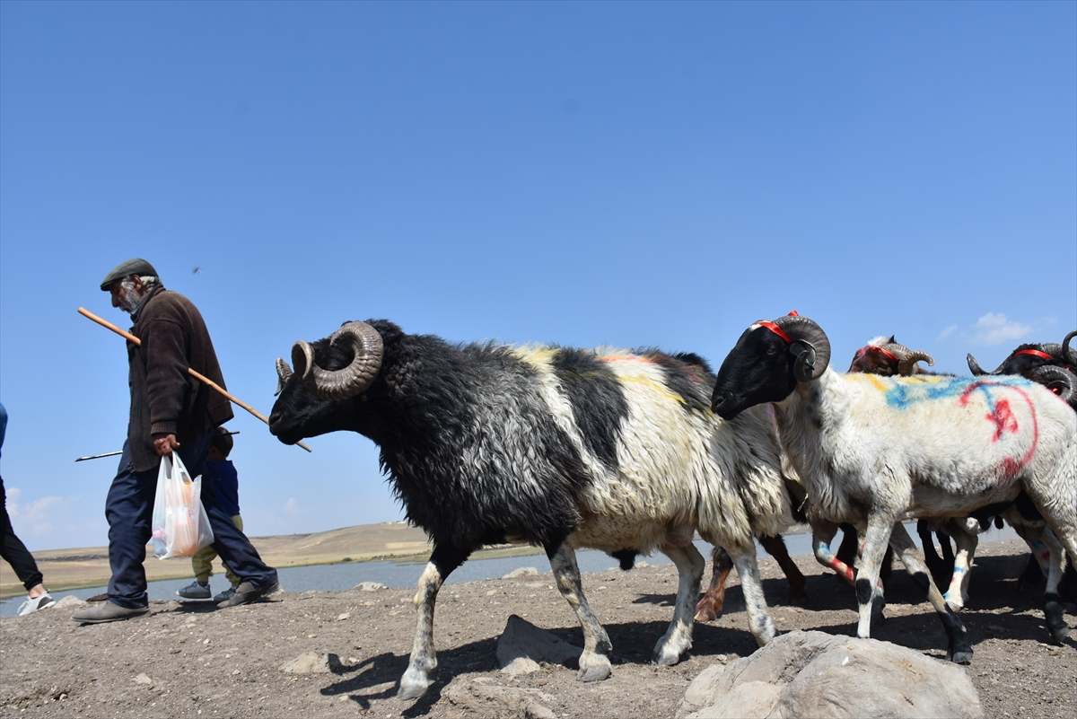 karsta-yasatilan-asirlik-gelenek-coban-bayrami-(8).jpg