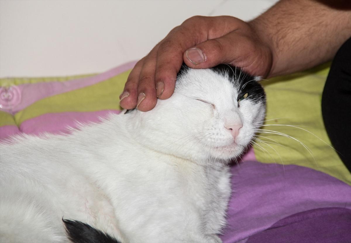 saglik-personeli-ile-yarali-kedi-arasinda-siyah-beyaz-bir-sefkat-hikayesi-(4).jpg