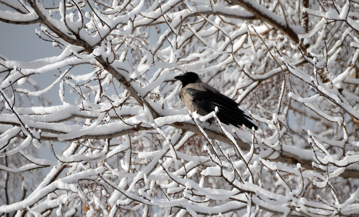 sarikamista-kars-yagisi--(4).jpg