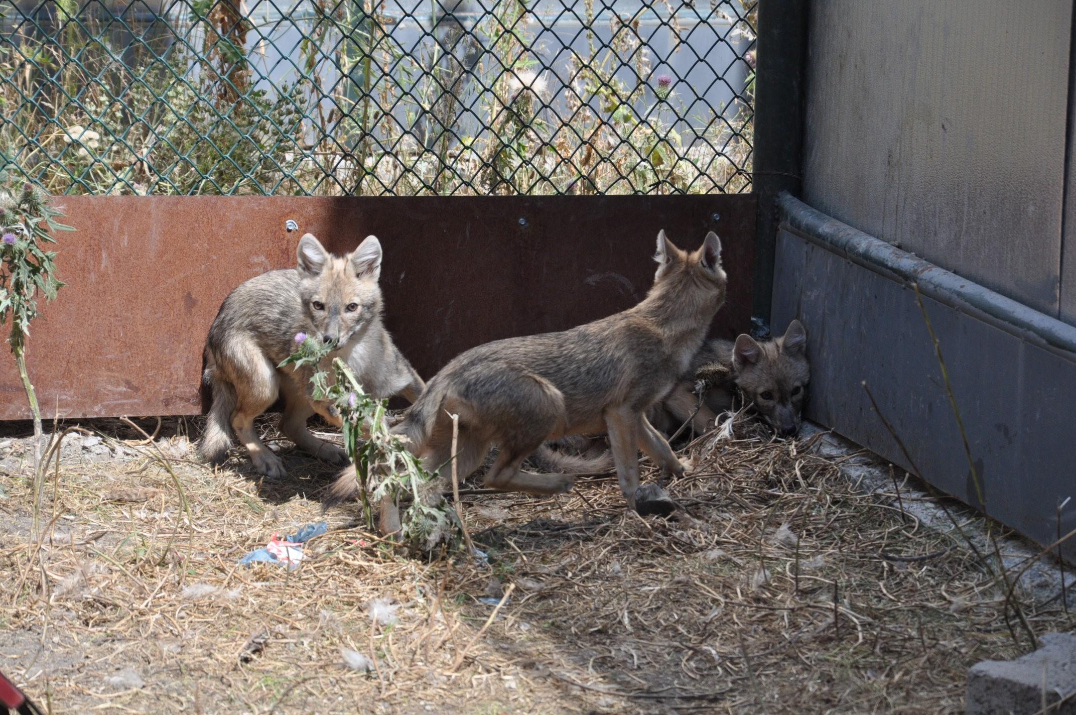 yaban-hayvanlari-karsta-sifa-buluyor-(4).jpg