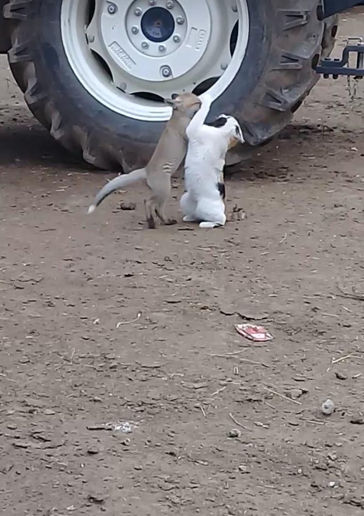 yavru-tilki-ile-kedinin-dostlugu-(1).jpg