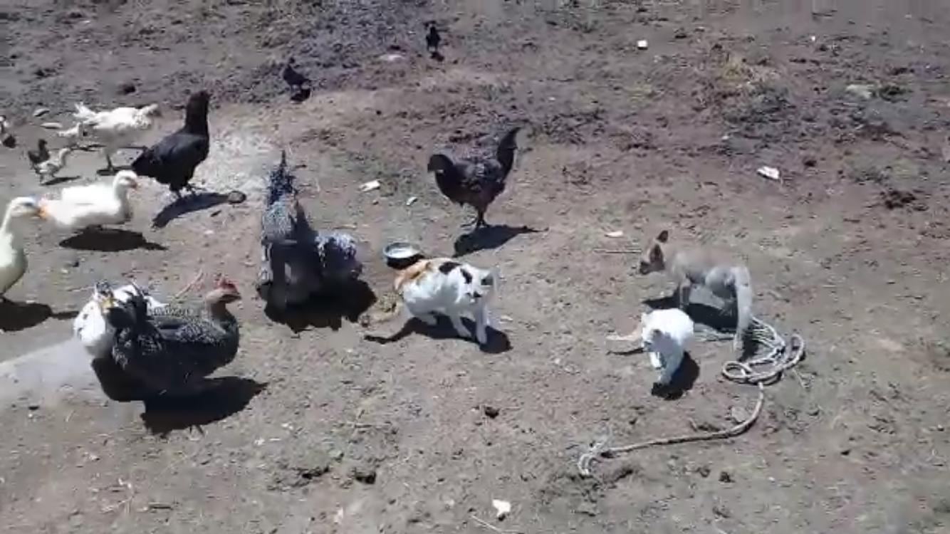 yavru-tilki-ile-kedinin-dostlugu-(4).jpg